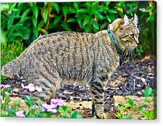 Highland Lynx Cat In Garden Acrylic Print by Susan Leggett