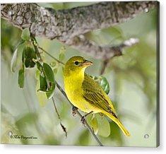 Highlighter Yellow Acrylic Print