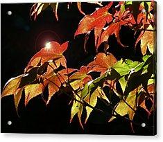 Highlighting The Season Of Fall 2 Acrylic Print by Cindy Wright