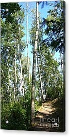 Acrylic Print featuring the photograph Hiking Trail by Jim Sauchyn