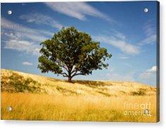 Hill Top Beauty Acrylic Print by Scott Pellegrin