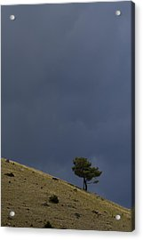 Acrylic Print featuring the photograph Hillside Tree by J L Woody Wooden