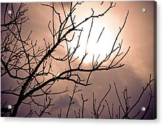 Hindered Sunset Acrylic Print by Victoria Lawrence