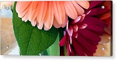 Acrylic Print featuring the photograph Hint Of Daisies by Lynnette Johns