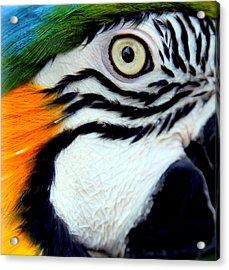 His Watchful Eye Acrylic Print by Karen Wiles