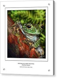 Hispanolian Green Treefrog Acrylic Print by Owen Bell