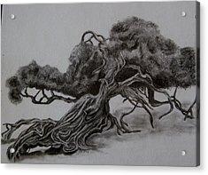 Hobbit Tree Acrylic Print by Joan Pye