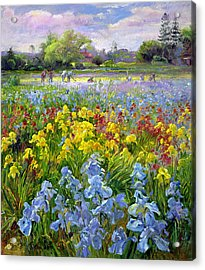 Hoeing Team And Iris Fields Acrylic Print by Timothy Easton