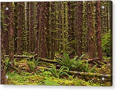 Hoh Rainforest Acrylic Print by Mark Kiver