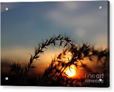 Hold On To The Sun Acrylic Print by Erica Hanel