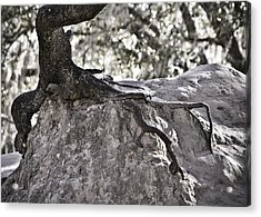 Holding On Acrylic Print by Carolyn Marshall
