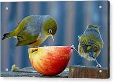 Holding The Apple Up Acrylic Print by Andrea Lightfoot