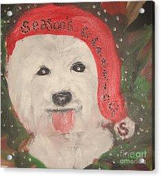 Holiday Westie Acrylic Print by Rachel Carmichael