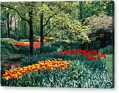 Holland Kuekenhof Garden Acrylic Print by Dale P Hanson and Photo Researchers