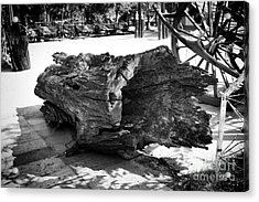 Acrylic Print featuring the photograph Hollow Log by Thanh Tran