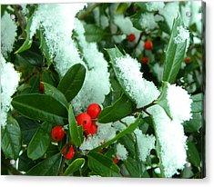 Holly In Snow Acrylic Print by Sandi OReilly