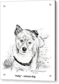 Acrylic Print featuring the drawing Holly Rescue Dog by Jim Hubbard