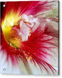 Hollyhock And The Ant Acrylic Print