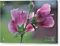 Hollyhocks Acrylic Print by Tamera James