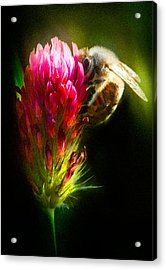 Acrylic Print featuring the photograph Honey Bee by Gary Rose