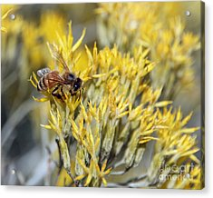 Honey Acrylic Print