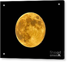 Honey Moon Close Up Acrylic Print