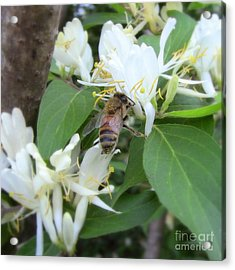 Acrylic Print featuring the photograph Honeybee Collecting Pollen by Renee Trenholm
