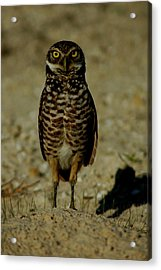 Hoo Are You? Acrylic Print