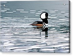 Acrylic Print featuring the photograph Hooded Merganser by Scott Holmes