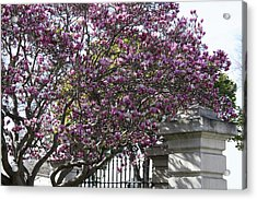 Hope For Spring Acrylic Print