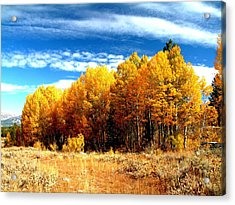 Hope Valley Aspens Acrylic Print