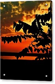Horicon Marsh At Sunset Acrylic Print by Alisha Luby