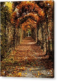 Hornbeam Alles, Birr Castle, Co Offaly Acrylic Print by The Irish Image Collection