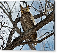 Acrylic Print featuring the photograph Horned Owl In Tree by Stephen  Johnson