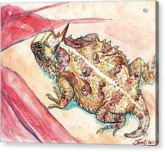 Horny Toad Acrylic Print by Jenn Cunningham