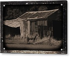Horse And Old Barn Acrylic Print