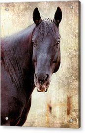 Acrylic Print featuring the photograph Horse  by Anna Rumiantseva