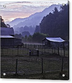 Horse At Home - North Carolina Farm Scene Acrylic Print by Rob Travis