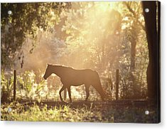 Horse Backlit At Sunset Acrylic Print by Seth Christie