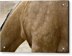 Acrylic Print featuring the photograph Horse Bending Neck by Lorraine Devon Wilke