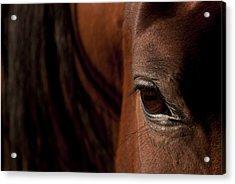 Horse Eye Acrylic Print by Michael Mogensen