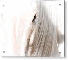 Horse Glow Acrylic Print by Toni Thomas