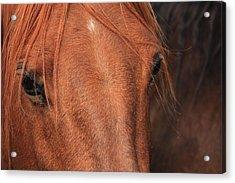 Horse Hide Acrylic Print