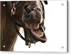 Horse Humour Acrylic Print by Heather Swan