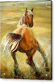 Horse In Field Acrylic Print