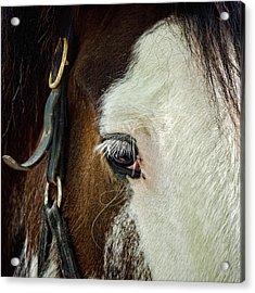 Horse Acrylic Print by Jana Smith