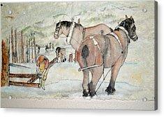 horse logging in Idaho Acrylic Print