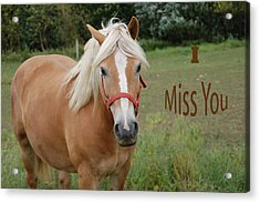 Horse Miss You Acrylic Print by Aimee L Maher Photography and Art Visit ALMGallerydotcom