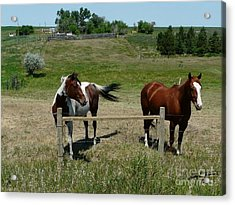 Horse On A Warm Day Acrylic Print by Bobbylee Farrier