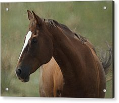 Horse Painterly Acrylic Print by Ernie Echols